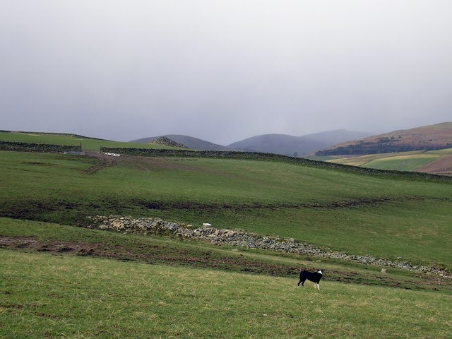 Fields on Meigle Farm