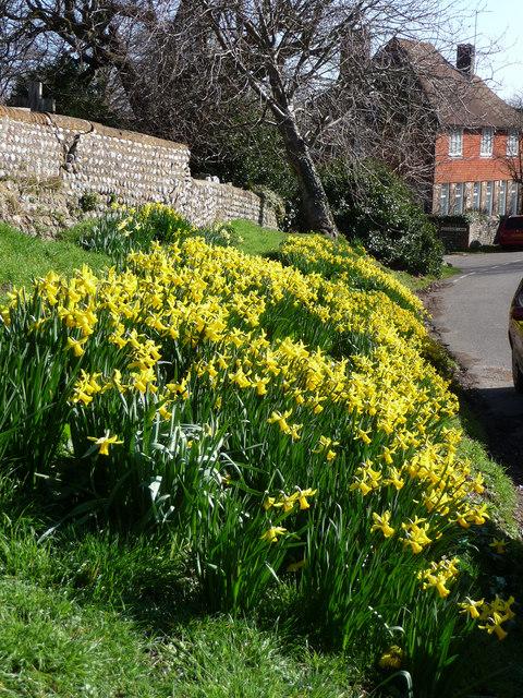 Daffodils outside the church