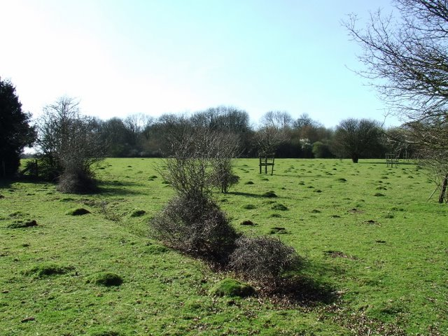Anthills in a field