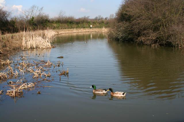 Nottingham Canal Nature Reserve