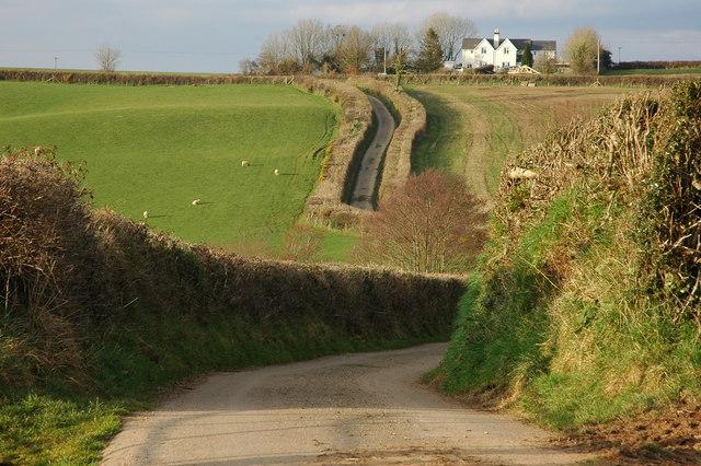 Country road near Hill Barton