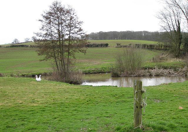 Pond at Chapel Farm