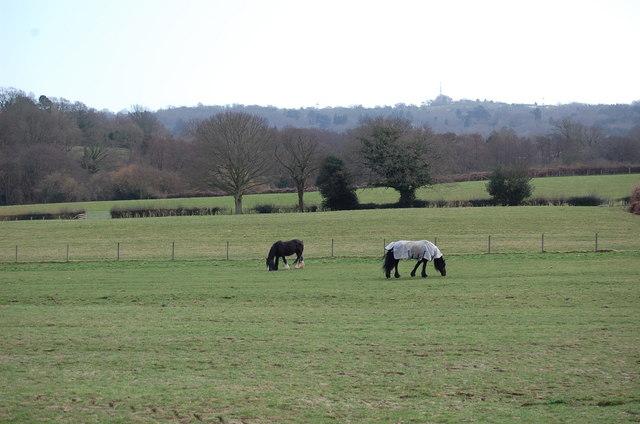 Horses in Field near Irelands Farm