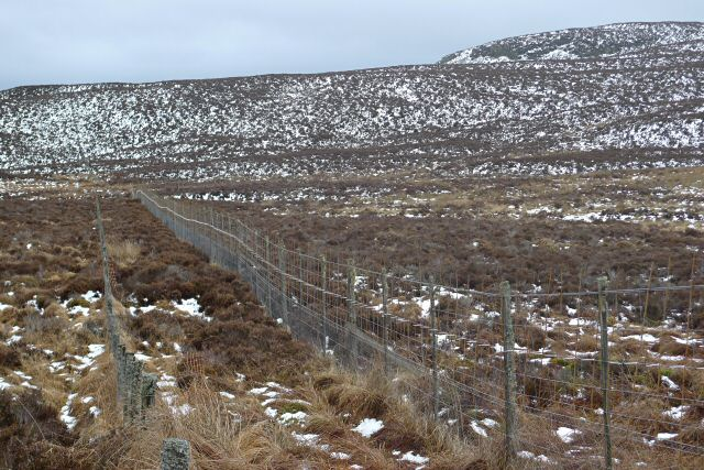 Deer fence across Glen Derby
