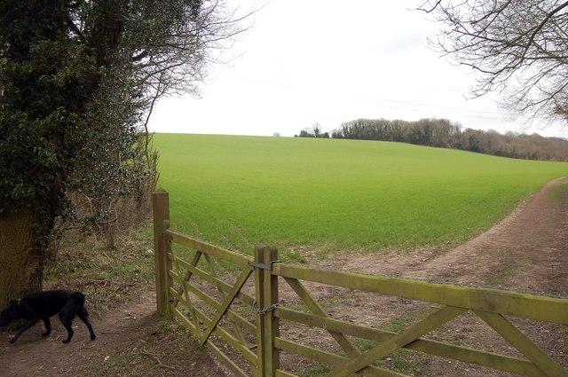 Field near Cuckoo Woods, High Elms
