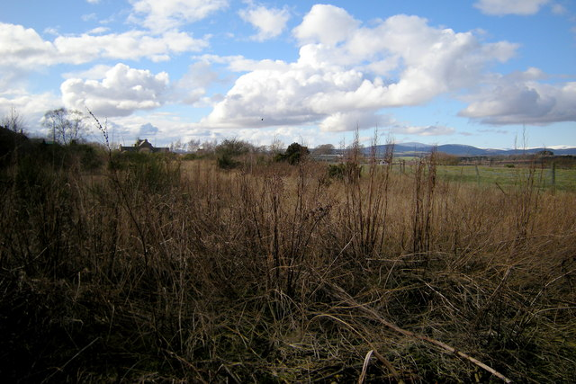 View of Dismantled Railway near Forfar, looking west