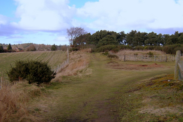 View of paths leading from Whitehills, Forfar