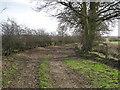 SJ5247 : View of Bridleway near Chads Farm by David Quinn