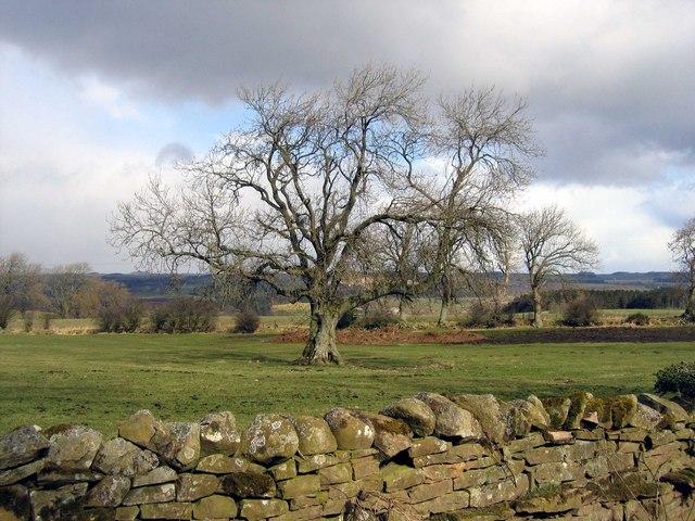Farmland near Heatheridge