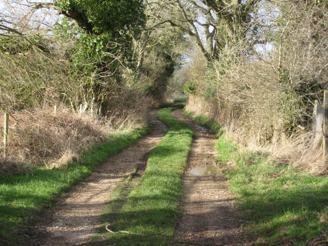 Bridleway to Bear Mead