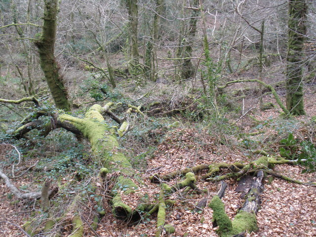 Bovey Valley Woodlands, National Nature Reserve