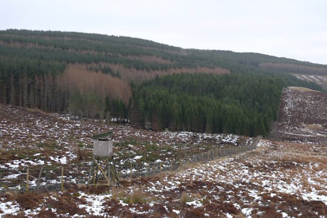 Kindrogan Wood above Glen Derby