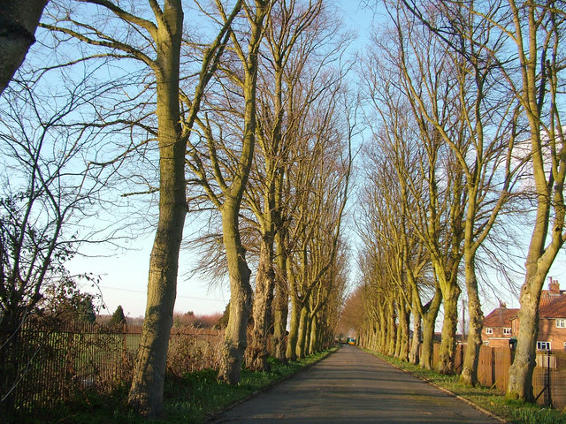 Avenue leading to Leiston Cemetery