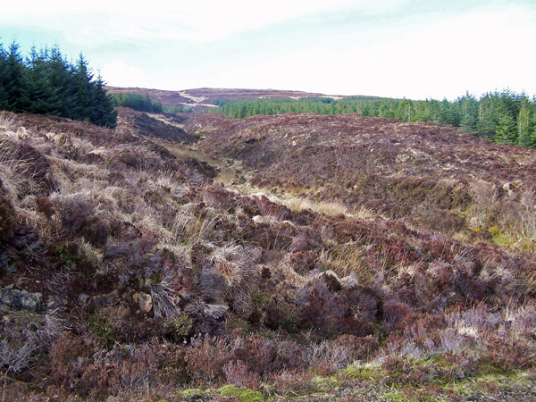 Greshornish Forest