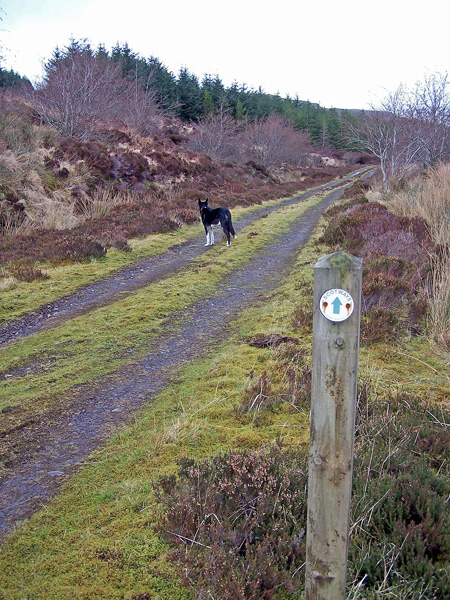 Waymarker at the junction