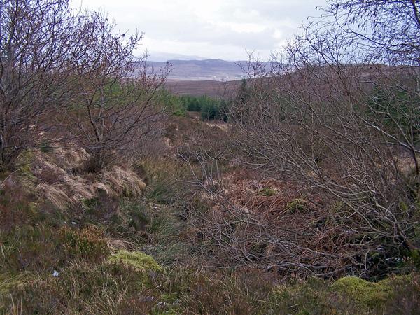 Greshornish Forest