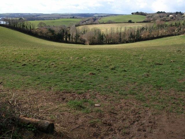Field by Wearde Road