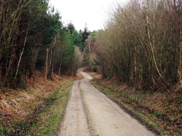 Track through Bedgebury Forest