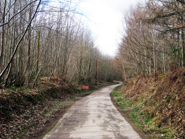 Access Road through Bedgebury Forest