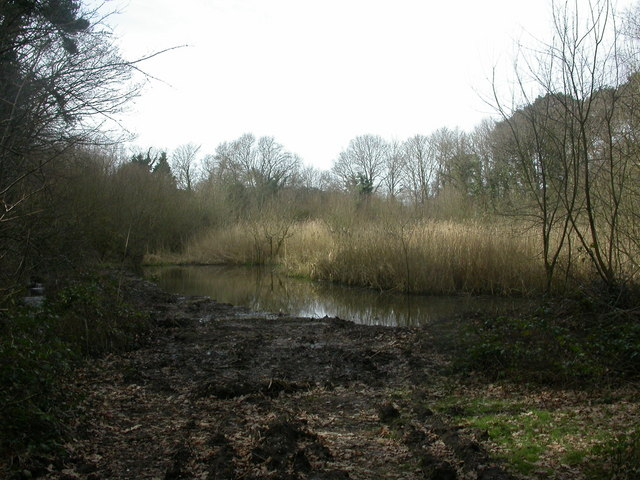 Bourne Valley Nature Reserve, pond