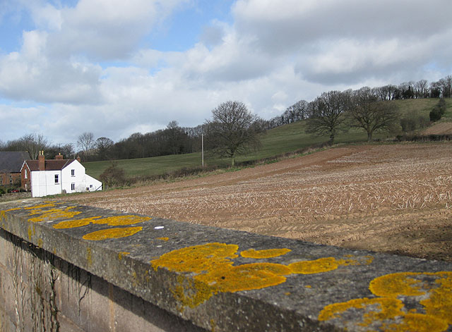 Lichened wall, Oldway Baptist Church cemetery