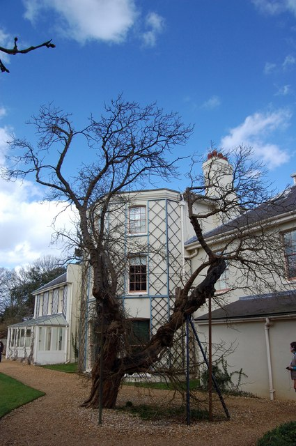 Darwin's Mulberry Tree, Down House
