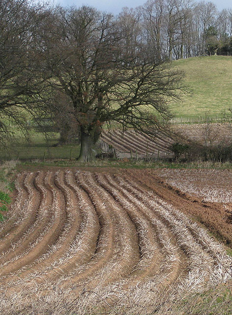 Wavy furrows