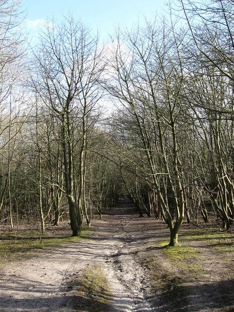 Bridleway to Newham Lane