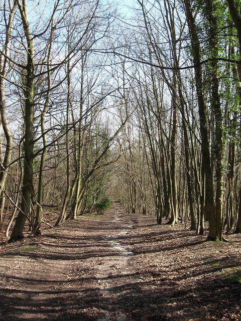 Bridleway to Charlton Court