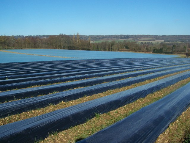 Plastic covered fields
