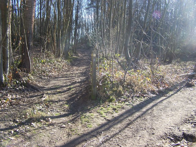 Footpath junction in Valley Wood