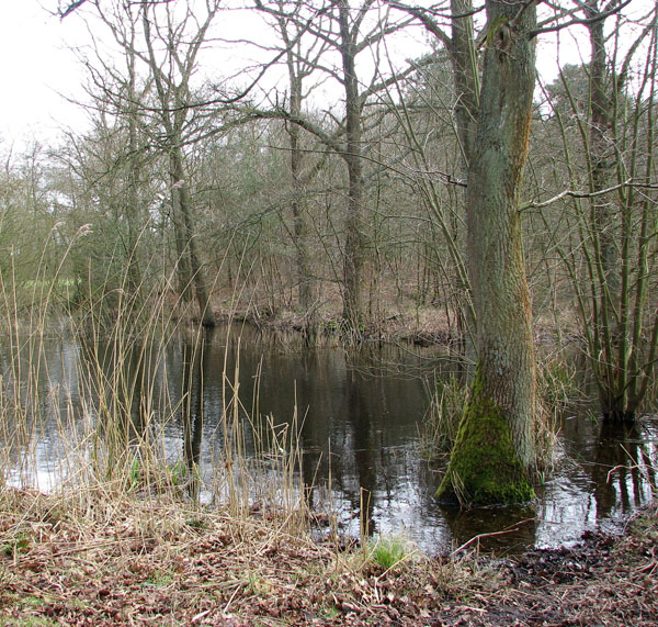 Pond in Hevingham Park
