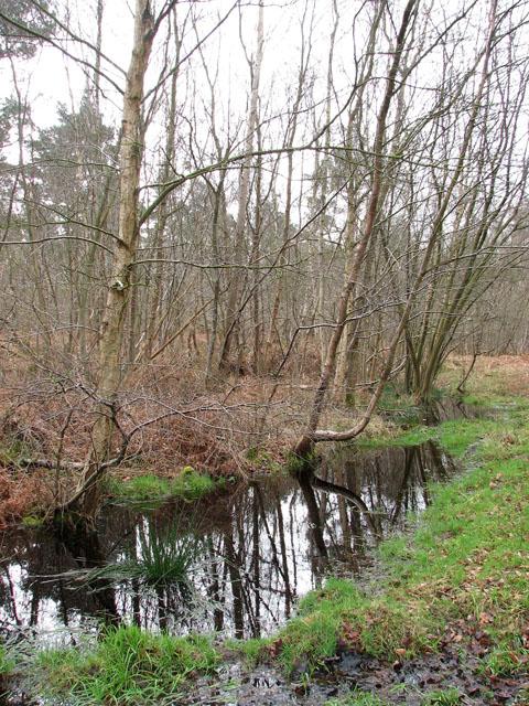 Wet ground beside footpath