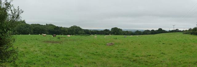 Mid Devon : Countryside & Sheep