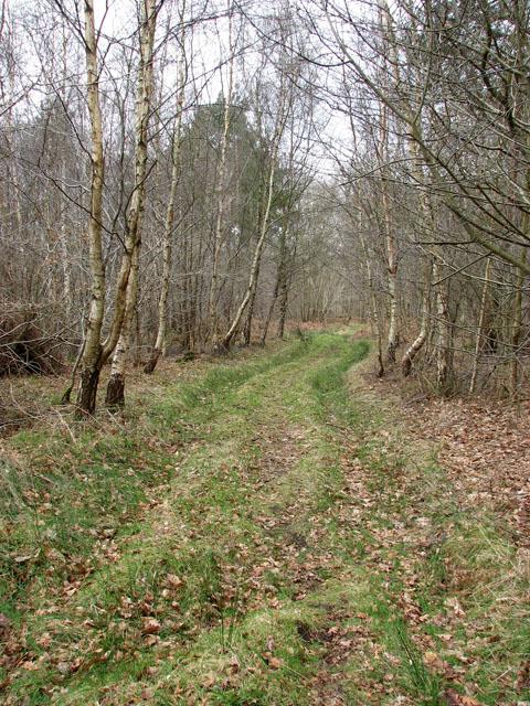 Old track traversing Hevingham Park