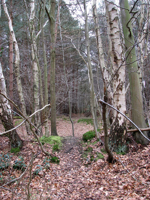 Path into Mansom Plantation
