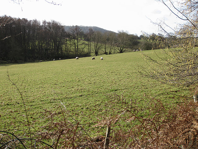 Sheep pasture south of Common Hill