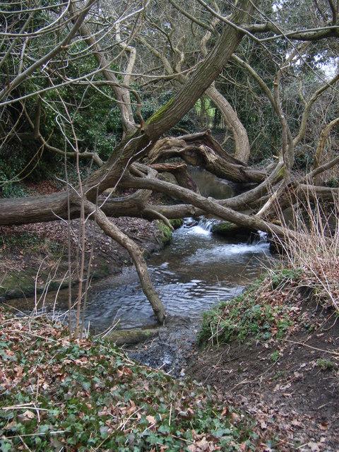 Evington Brook