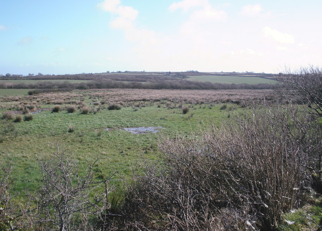 Marshy land, on Downland Farm