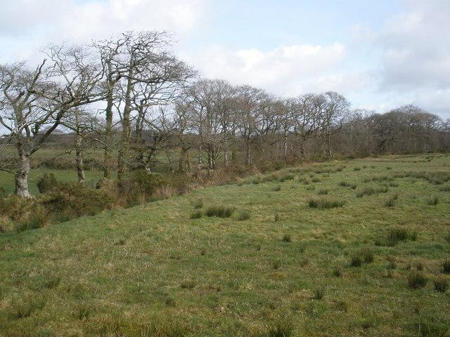Field boundary, on East Brown's Farm