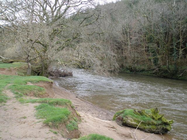 The River Torridge flows past Gowman's Cleave Wood