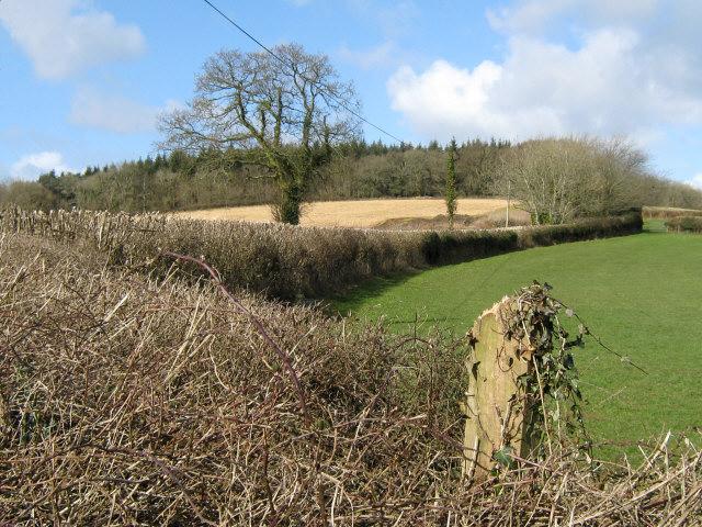 Newly cut hedgerow, Westleigh Farm