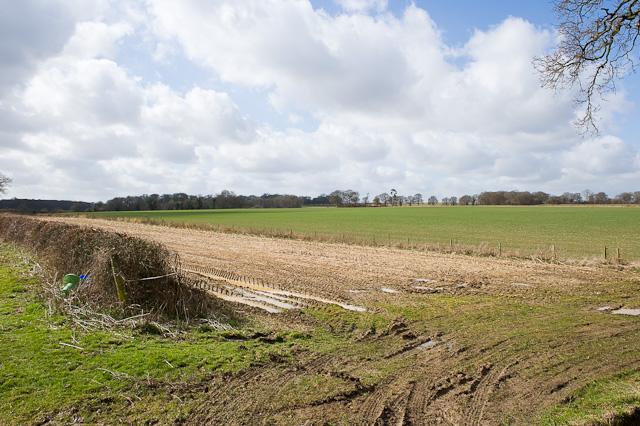 Fields west of Westfield Farm, Cheriton