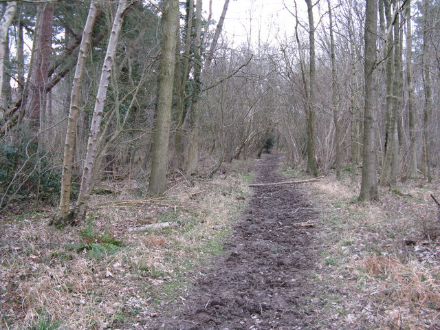 Bridleway in Woodshill Copse