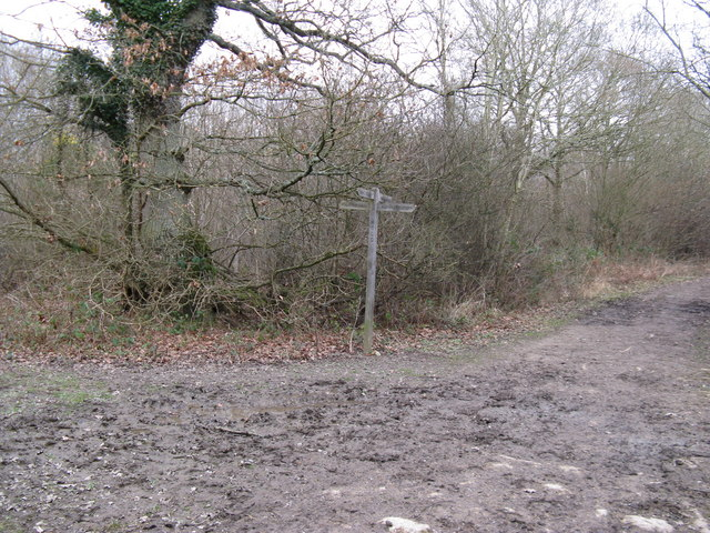 Bridleway junction in Woodshill Copse
