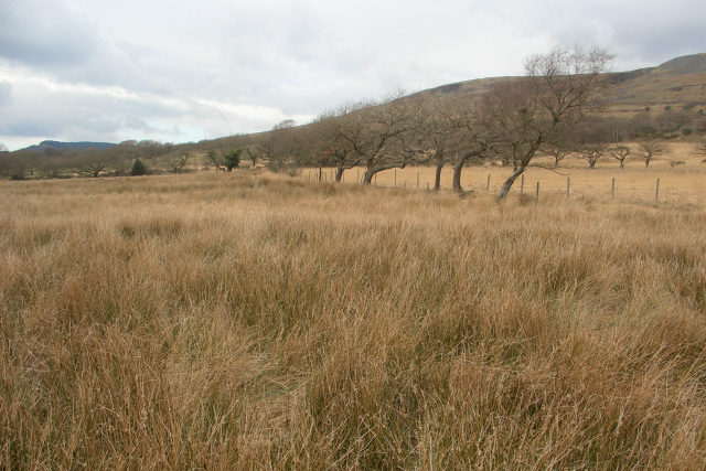 Fields and slightly stunted trees to the south of Mynydd Bach