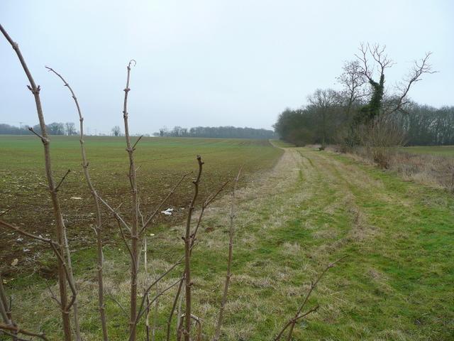 Wide field margin