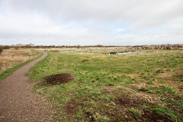 Lawson's Wetland