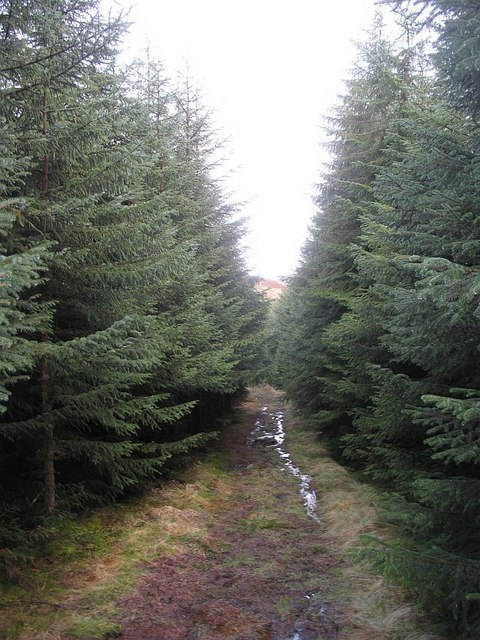 Kilbo Path