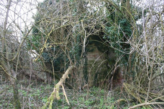 Cottage in the ivy